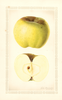 Apples, Jacobs Sweet (1928)
