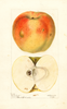 Apples, Jacobs Sweet (1895)