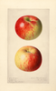 Apples, Jefferies (1920)
