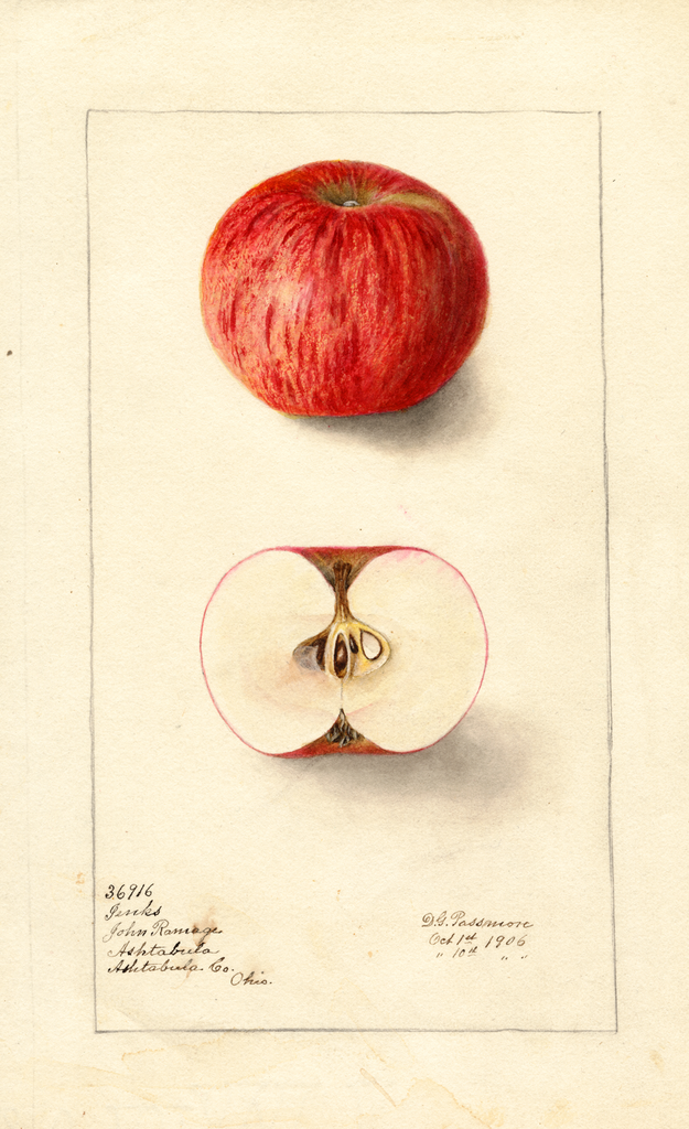 Apples, Jenks (1906)