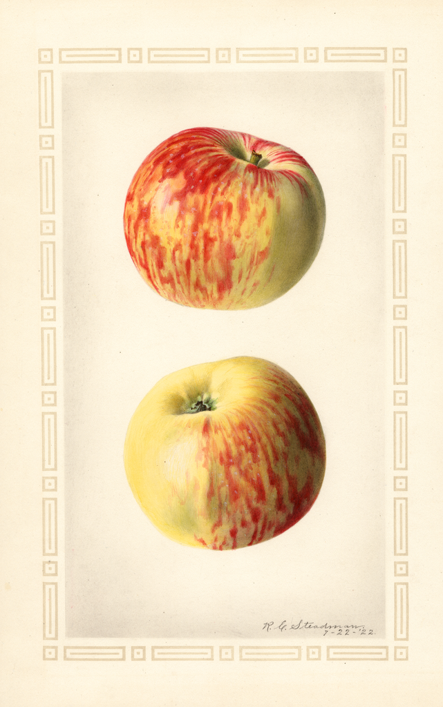 Apples, Oldenburg (1922)