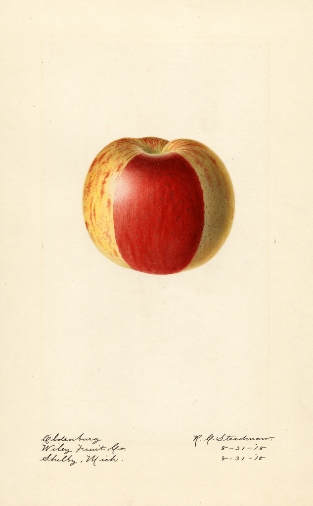 Apples, Oldenburg (1918)