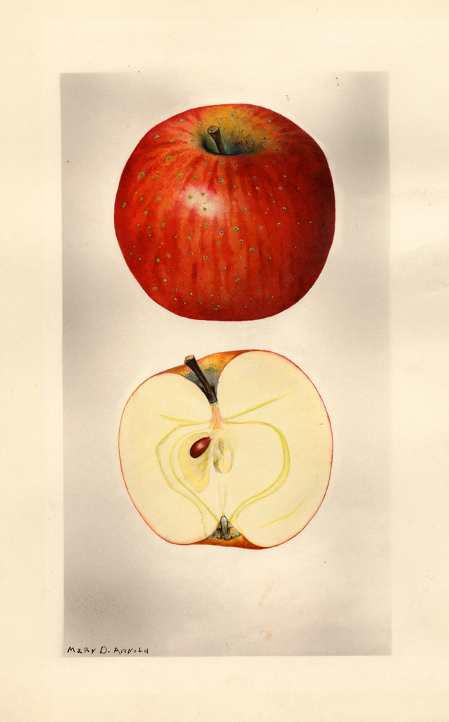 Apples, Oliver Red
