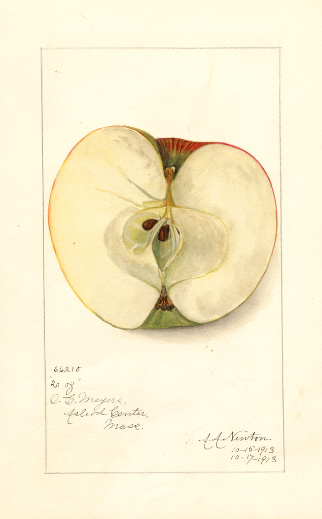 Apples, Twenty Ounce (1913)