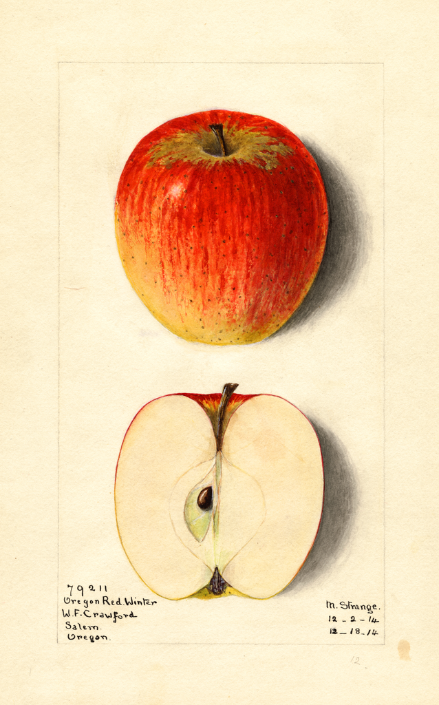 Apples, Oregon Red Winter (1914)