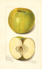 Apples, Mann (1913)