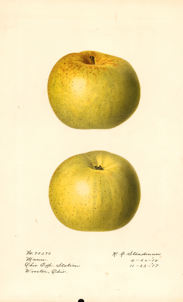 Apples, Mann (1918)