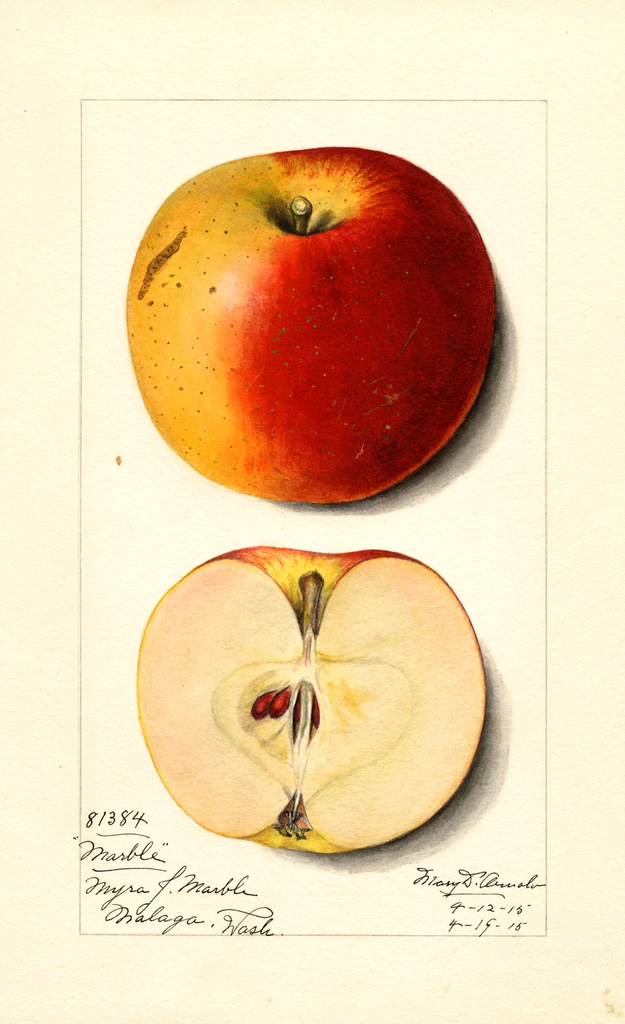 Apples, Marble (1915)