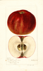 Apples, Rosenhager (1896)
