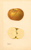 Apples, Roxbury (1932)