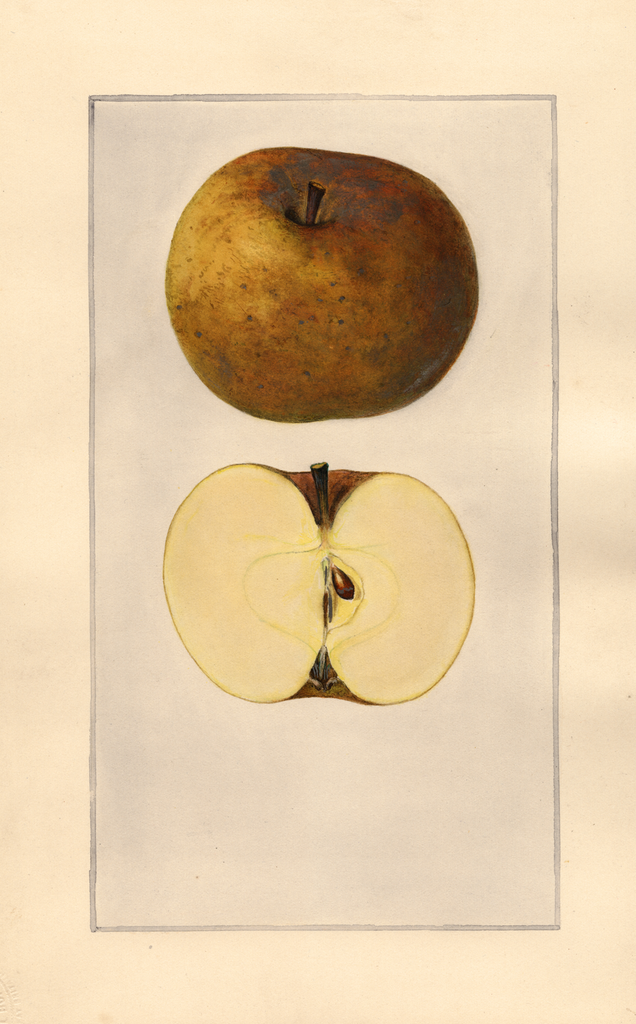 Apples, Roxbury (1925)