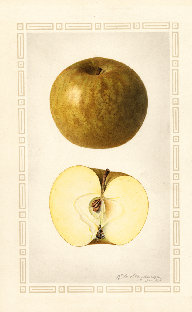 Apples, Roxbury (1923)