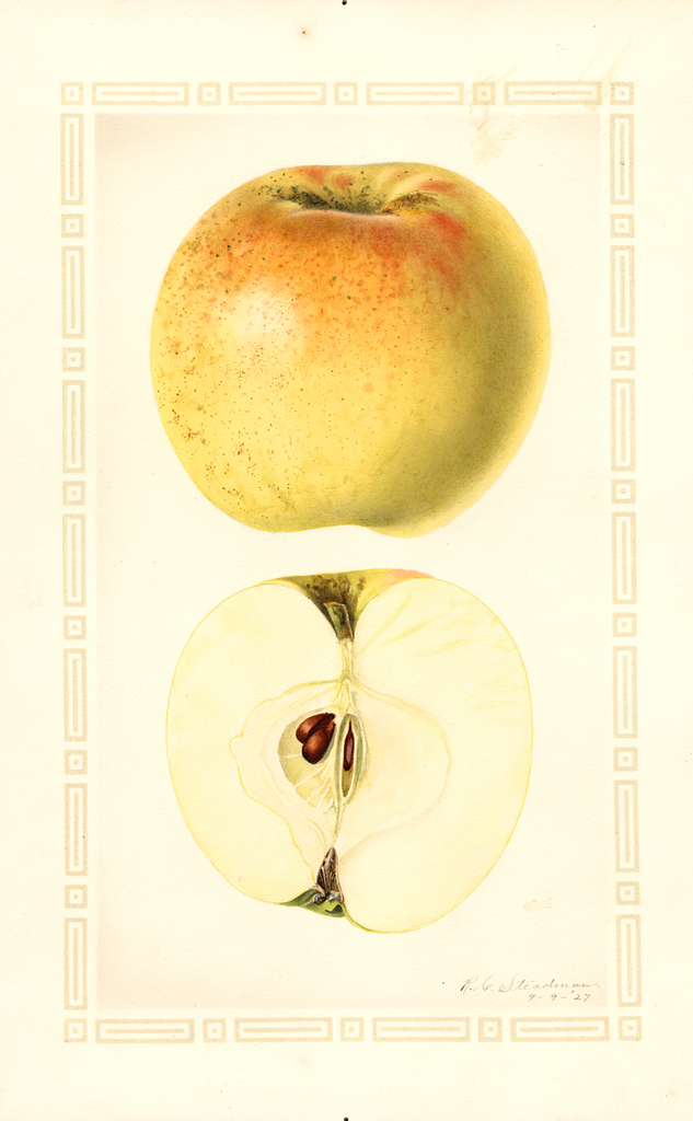 Apples, Royal Jubilee (1927)