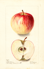 Apples, Mary (1901)