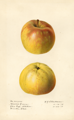Apples, Masons Orange (1918)