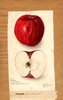 Apples, Williams (1899)