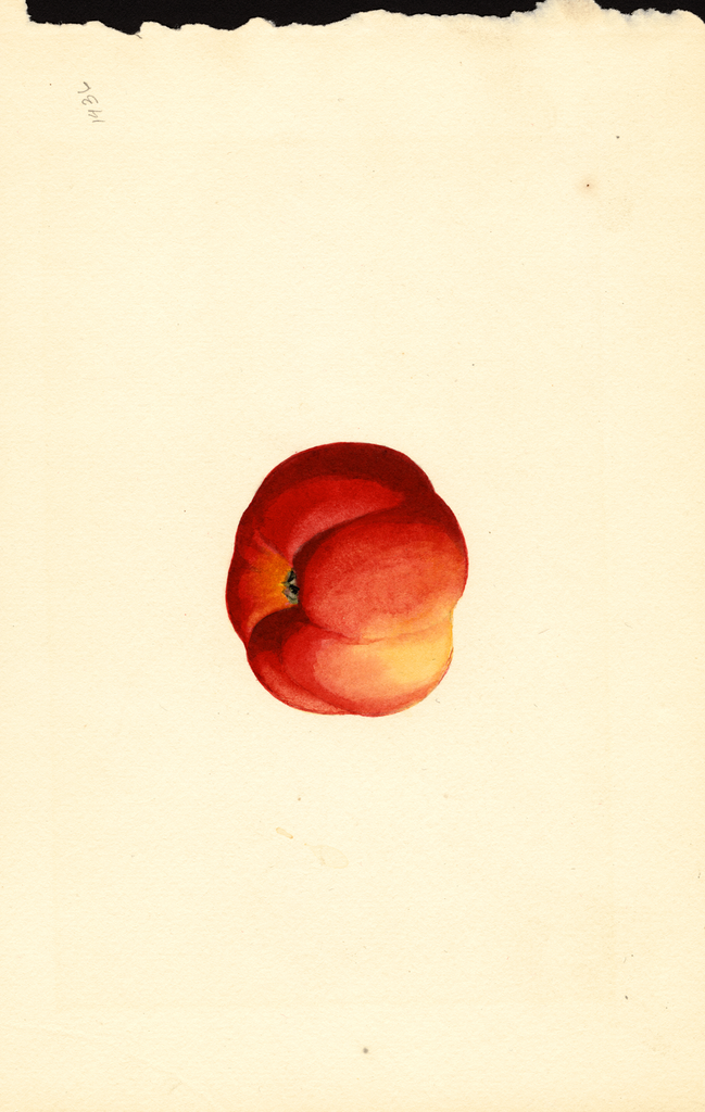 Apples, Jonathan (1925)