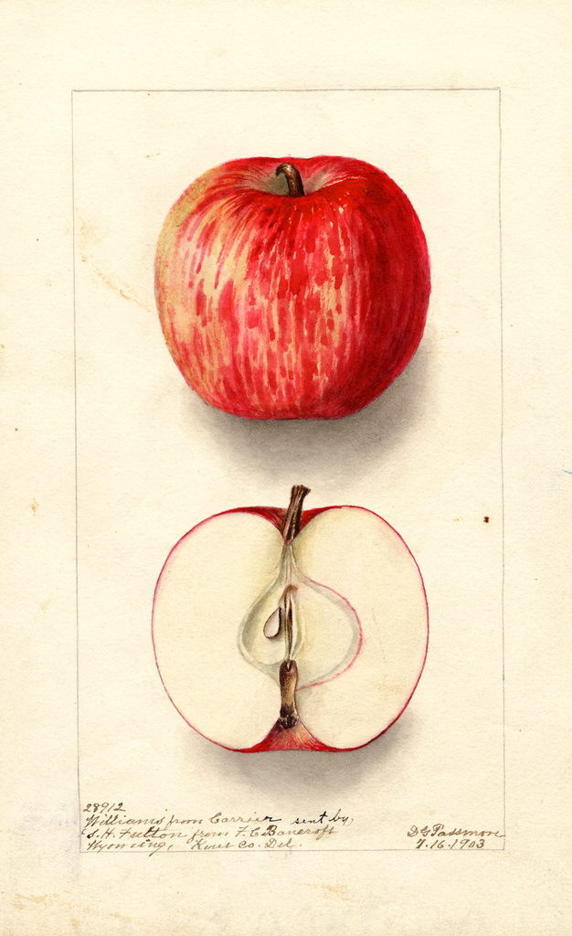 Apples, Williams (1903)
