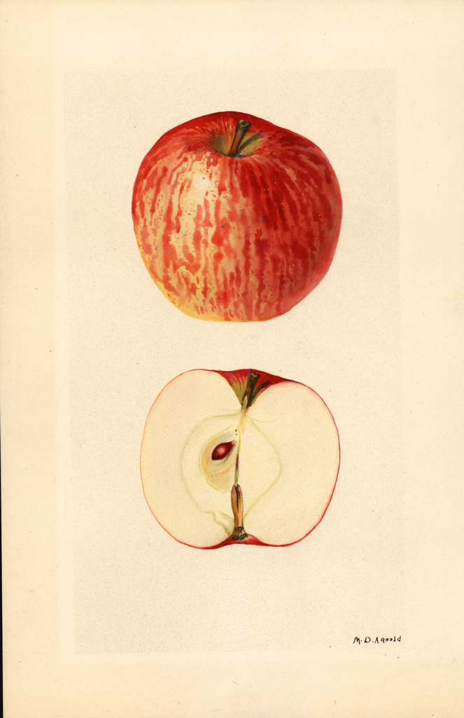 Apples, Williams (1928)
