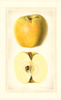 Apples, Yellow Newtown (1927)