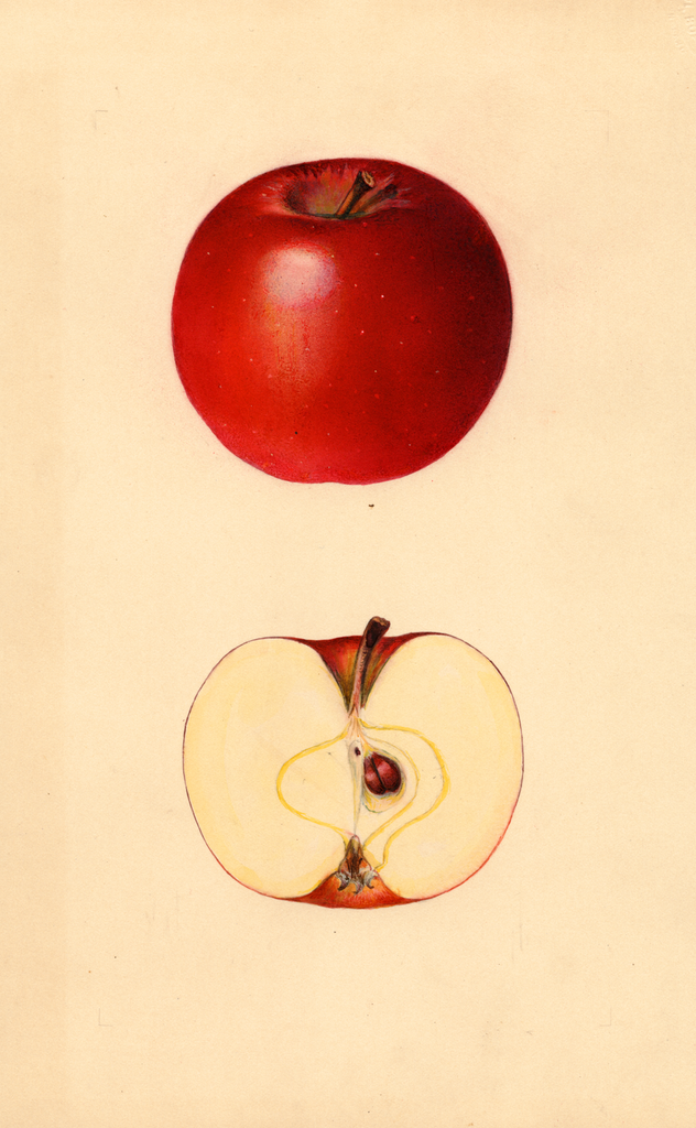 Apples, Jonathan (1934)