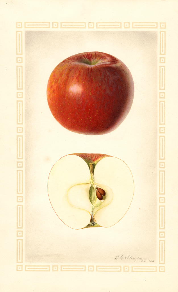 Apples, Lady Sweet (1926)