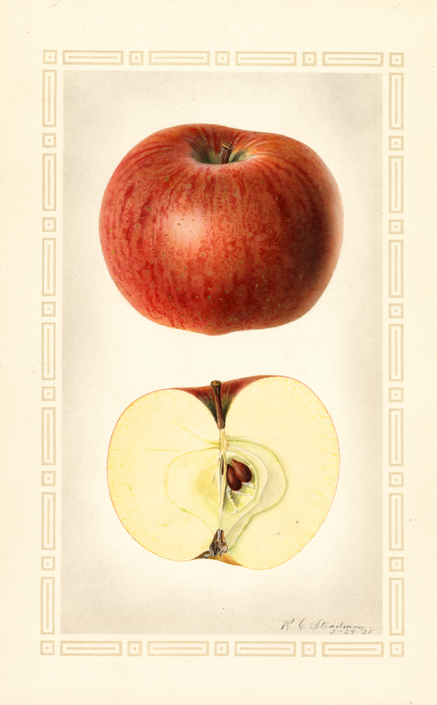Apples, Nickerjack (1925)