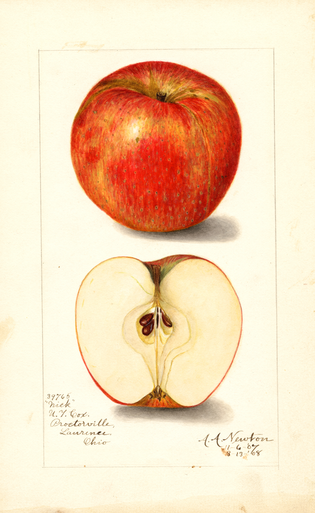 Apples, Nick (1908)