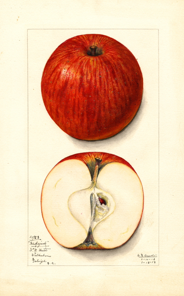 Apples, Nickajack (1913)