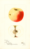 Apples, Nittany (1897)