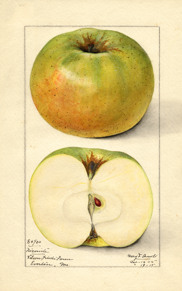 Apples, Nixonite (1915)