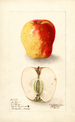 Apples, No Blow (1905)