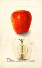 Apples, No Blow (1902)