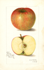 Apples, No Core (1908)