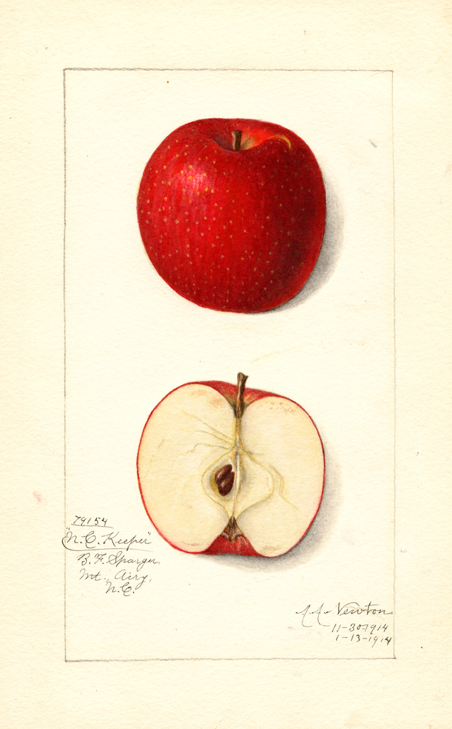 Apples, North Carolina Keeper (1914)