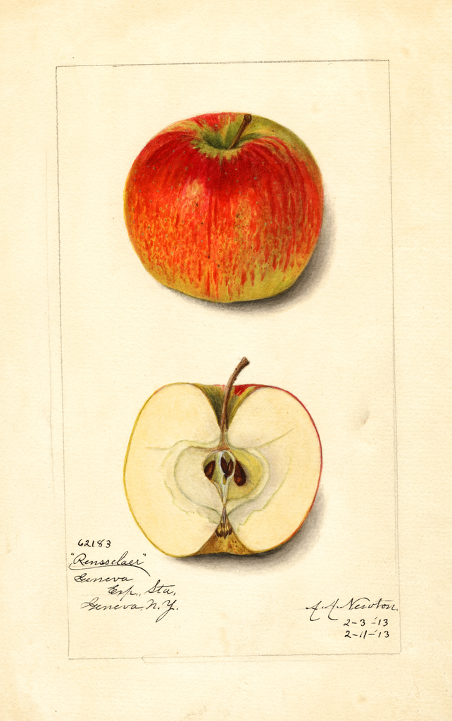 Apples, Rensselaer (1913)