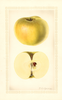 Apples, Ontario (1927)
