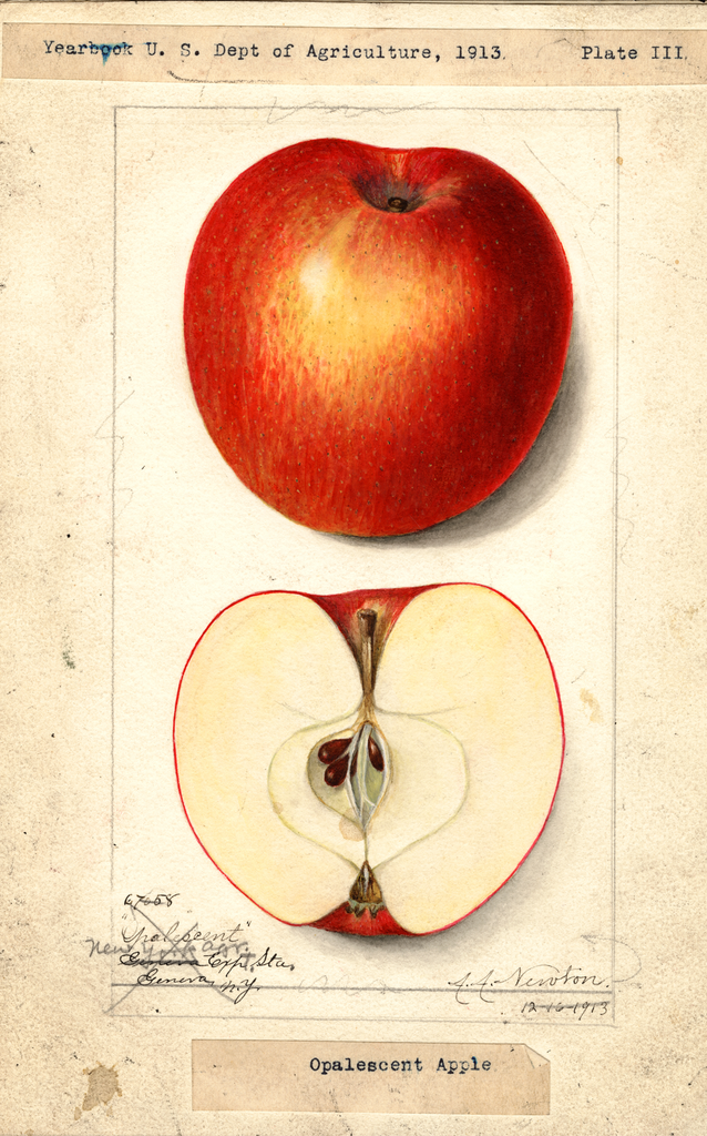 Apples, Opalescent (1913)