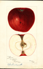 Apples, Opalescent (1897)