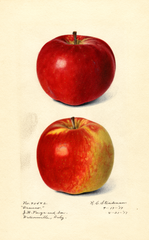 Apples, Oranco (1917)