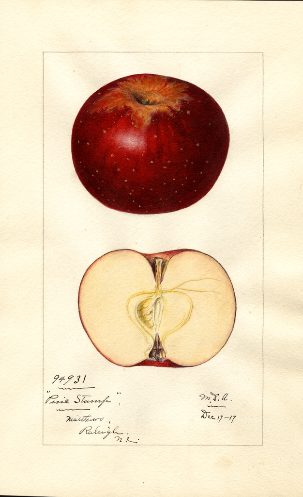 Apples, Pine Stump (1917)