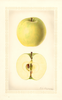 Apples, Ortley (1927)