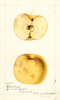 Apples, Oskaloosa (1894)