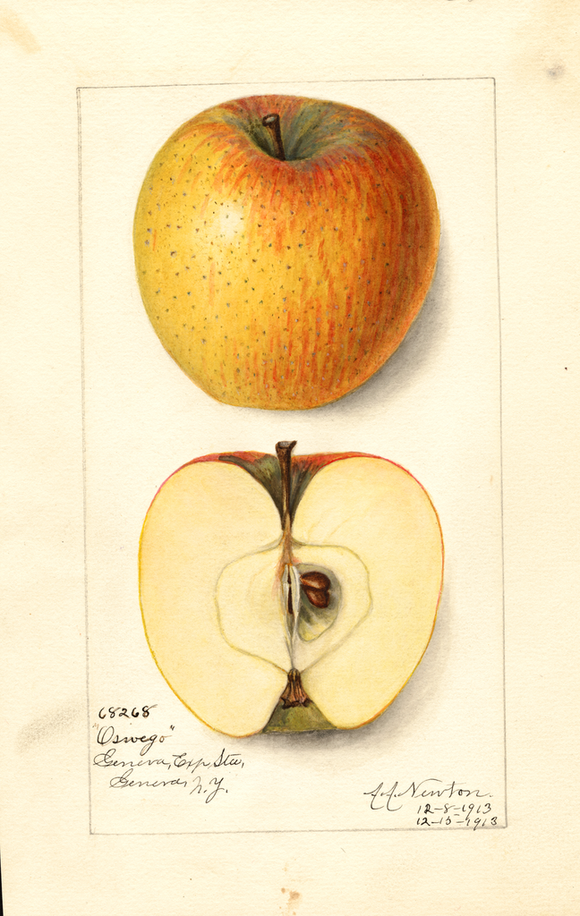 Apples, Oswego (1913)