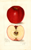 Apples, Oswego (1908)
