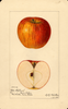 Apples, Otto Schlegel (1921)