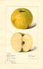 Apples, Oxford Orange (1915)