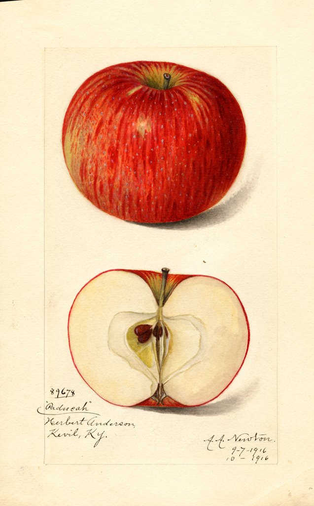 Apples, Paducah (1916)