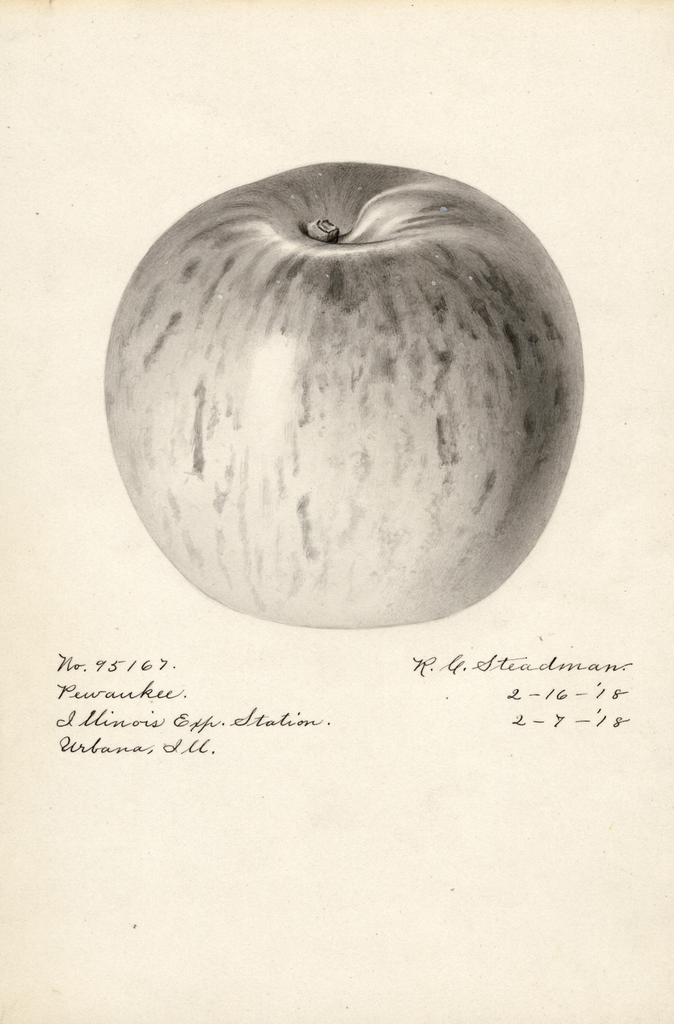 Apples, Pewaukee (1918)