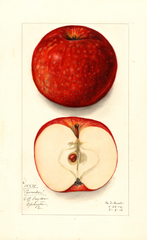 Apples, Pewaukee (1912)